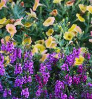 Flowers at the NC Arboretum