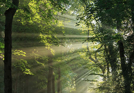 Sunlight streaming through the forest