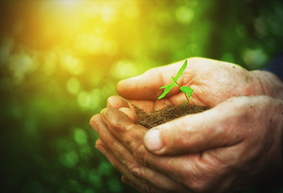 cupped hands holding seedling