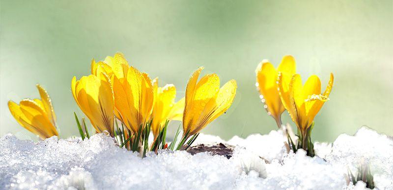 Flowers blooming in snow